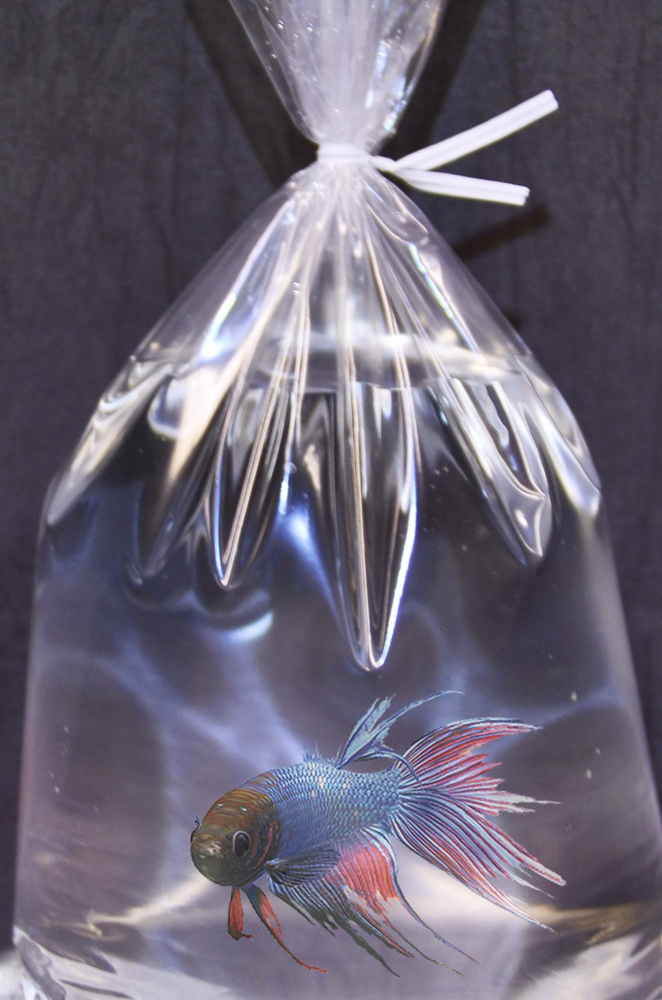 aquarium bags